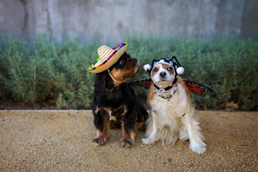 Rocky & Coco
