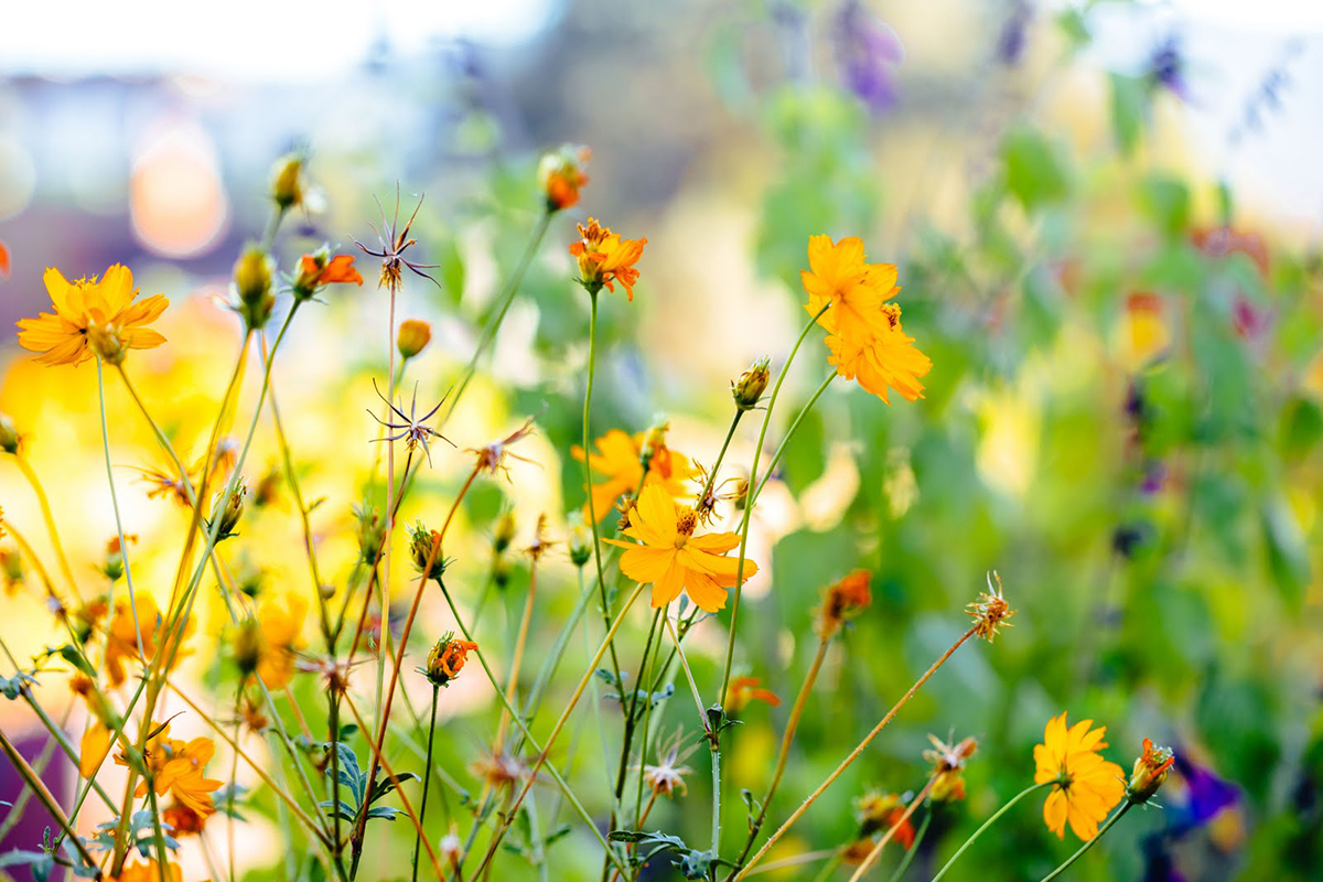 Wheeler Farms wild flowers