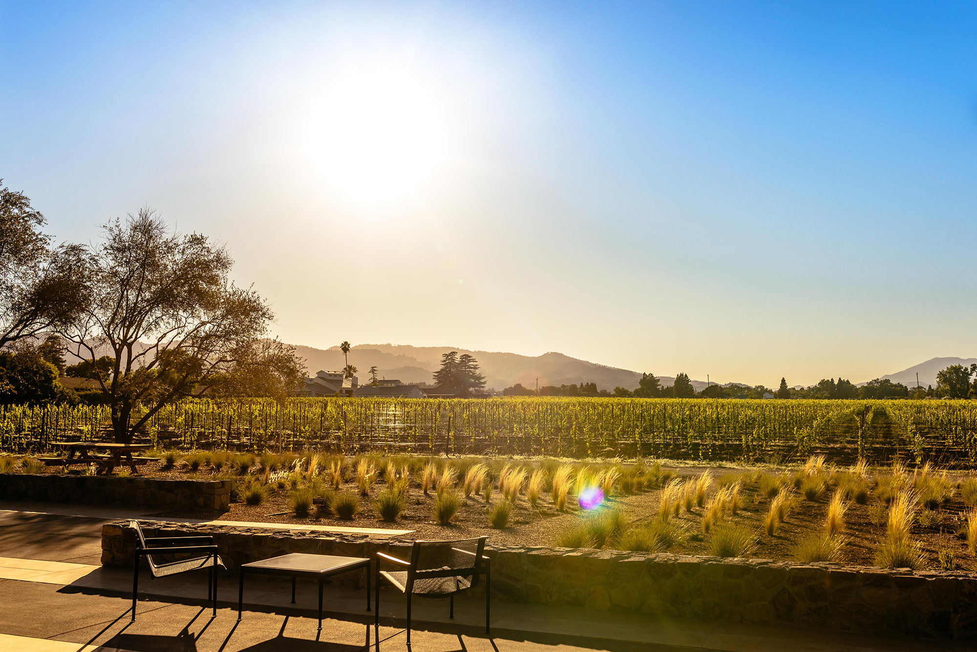 Wheeler Farms Leading Winereis of Napa