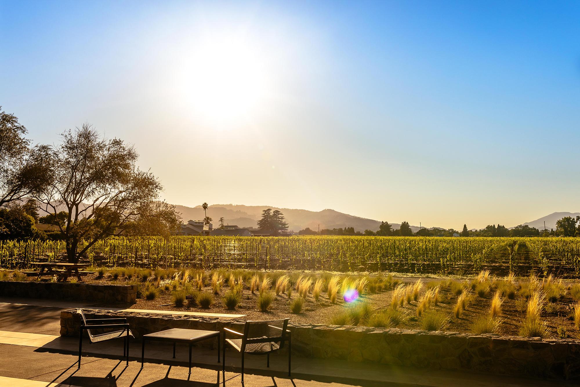 Wheeler Farms Leading Winereis of Napa