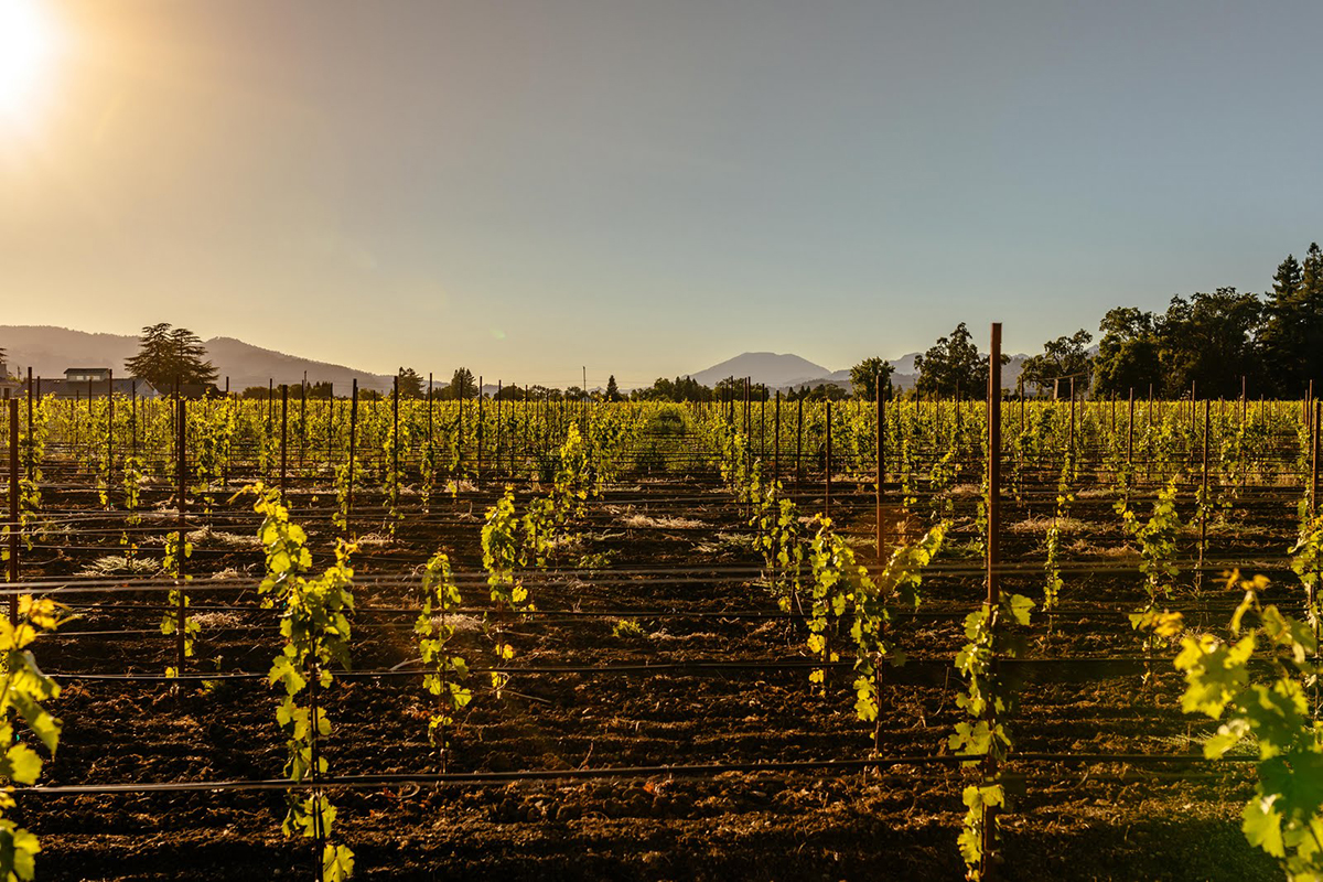 Wheeler Farms Leading Wineries of Napa