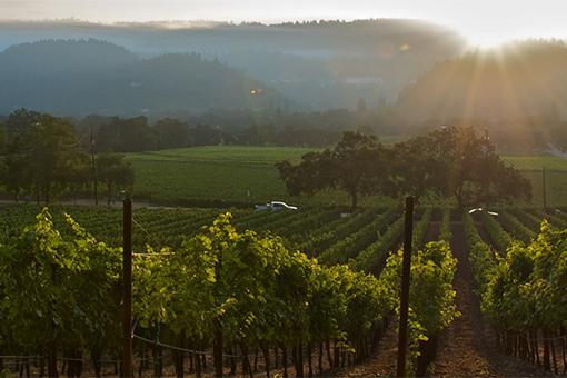 AXR-Vineyards